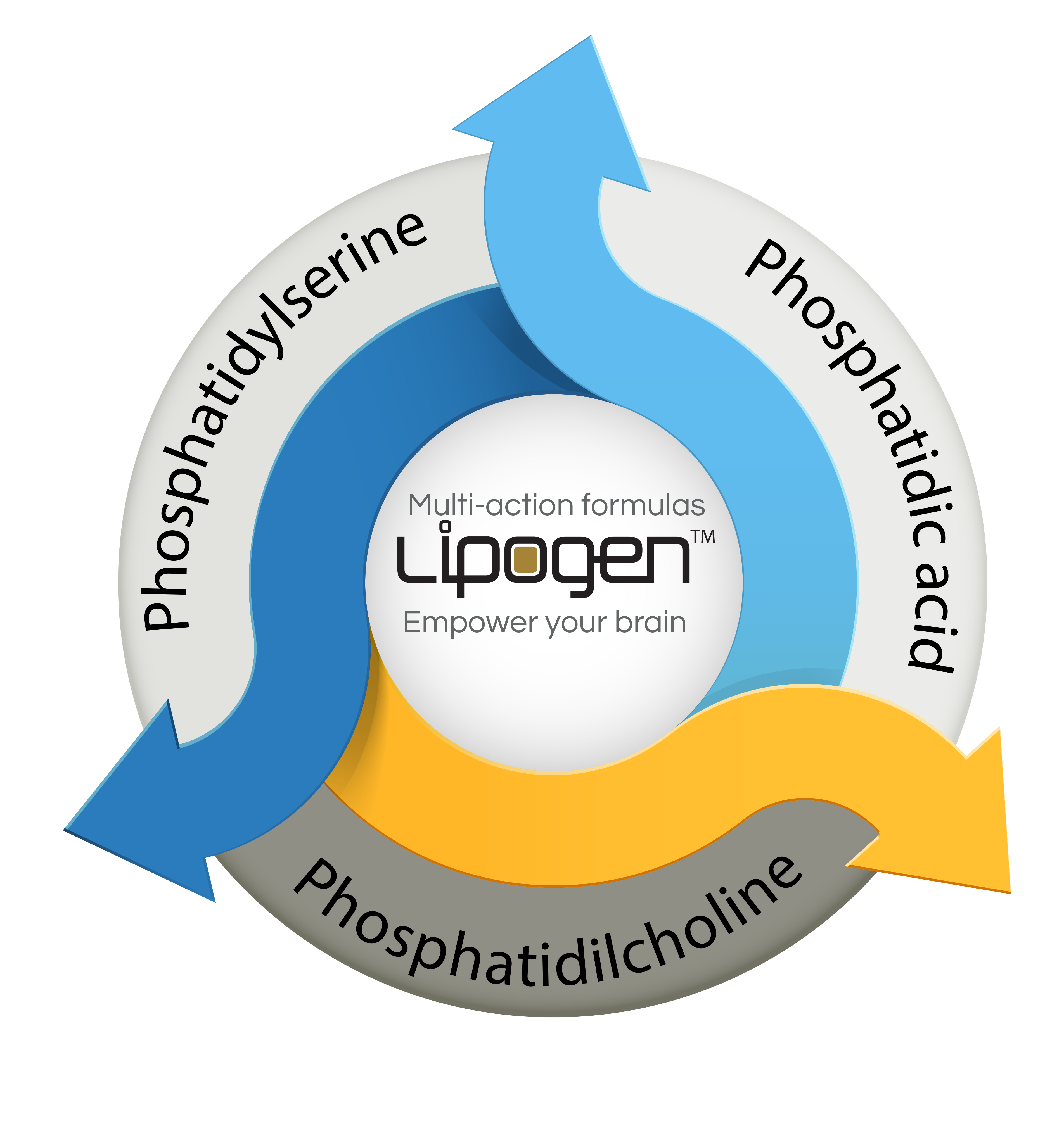 lipogen_image1